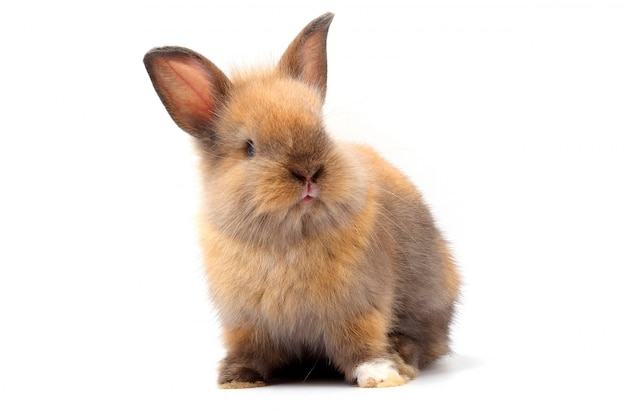 Conejito, lindas orejas, sentado sobre un blanco