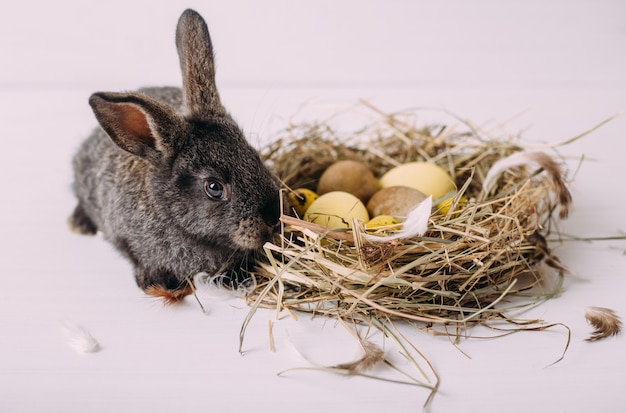 Conejito de pascua con huevos de pascua y un nido de heno. conejito gris