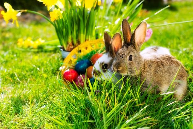 Conejito de pascua en pradera con cesta y huevos