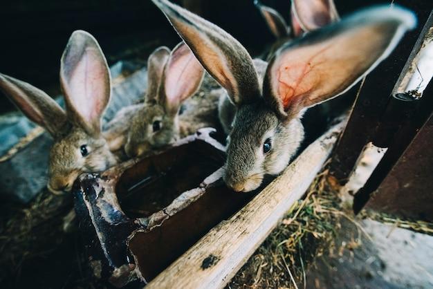 Conejitos bebiendo agua en la jaula.