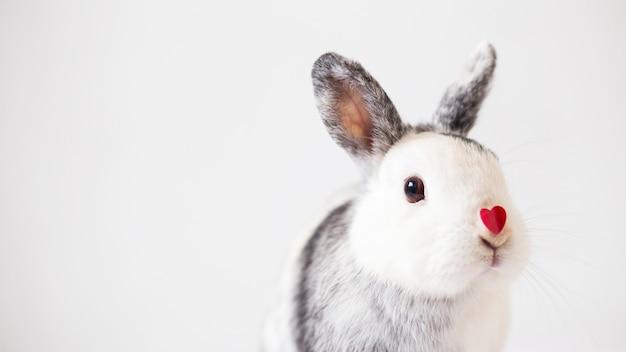 Conejo con adorno corazon en nariz.
