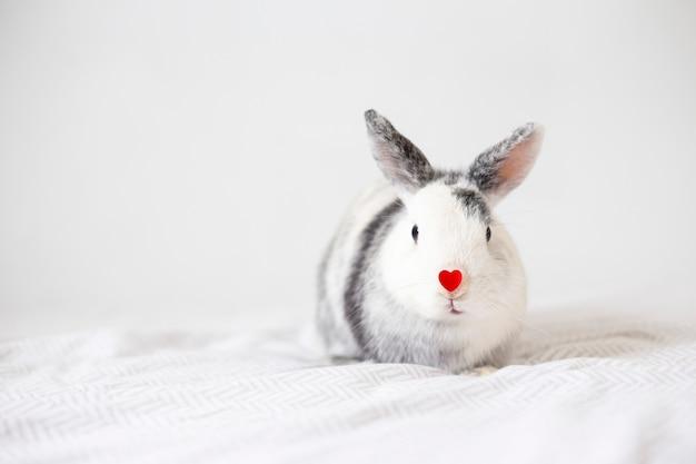 Conejo con adorno corazón rojo en nariz.