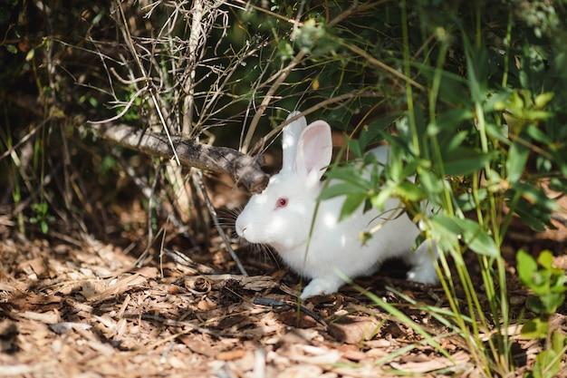 Conejo blanco en la naturaleza