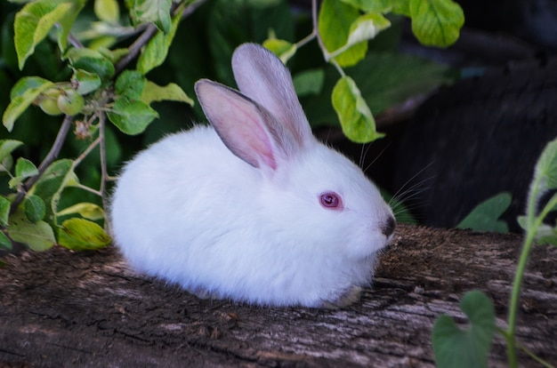 Conejo blanco sentado sobre la hierba verde
