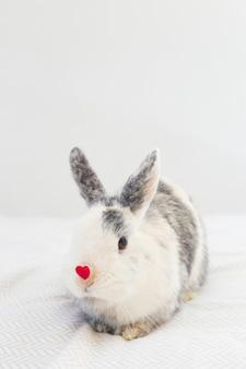 Conejo con corazón rojo decorativo en nariz.
