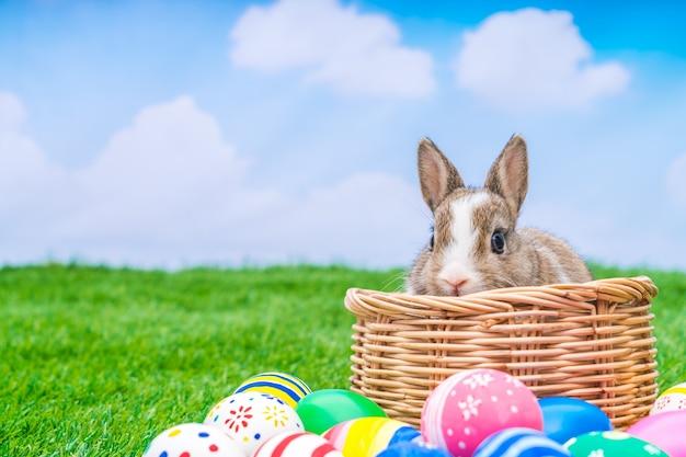Conejo y huevos de pascua en la hierba verde con el cielo azul