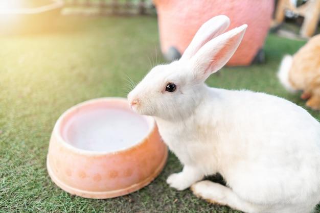 Conejo en el jardín de la granja.