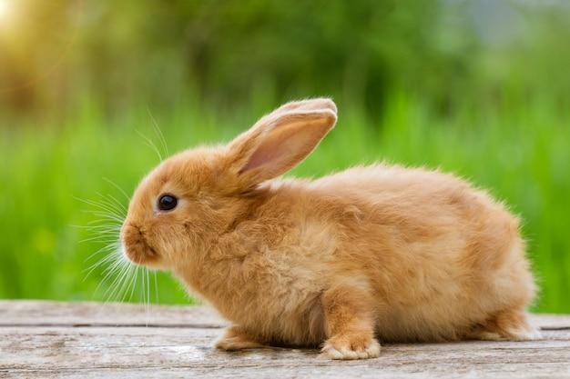 Conejo de jengibre divertido esponjoso sobre un fondo de naturaleza verde,