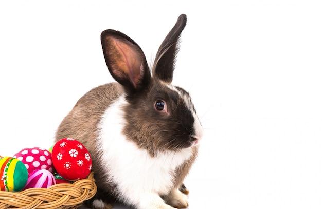 Conejo junto a unos huevos de pascua