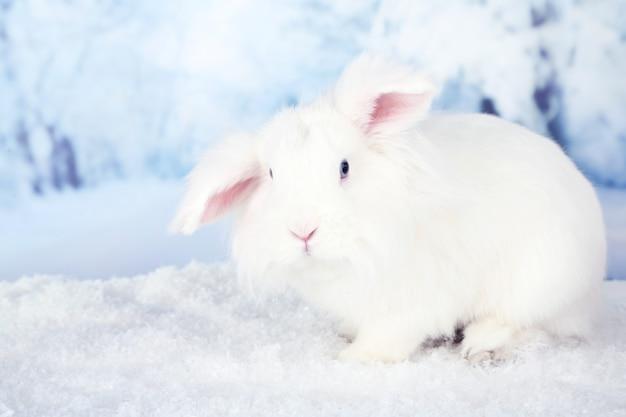 Conejo lindo blanco, sobre fondo de invierno