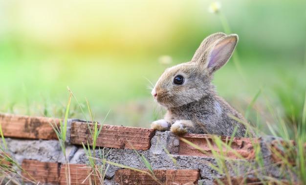 Conejo lindo que se sienta en el conejito de pascua del prado de la pared de ladrillo