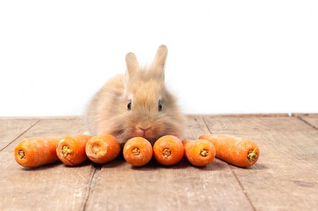 Conejo marrón comiendo zanahoria en el fondo de la mesa de madera