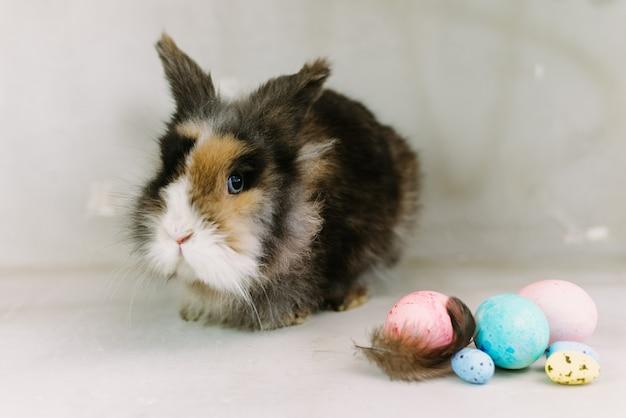 Conejo de pascua con huevo pintado multicolor sobre fondo gris. concepto de vacaciones de semana santa