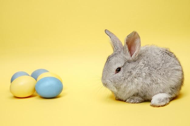 Conejo de pascua con huevos pintados sobre fondo amarillo. concepto de vacaciones de semana santa.