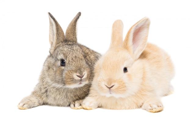Conejo sobre un fondo blanco