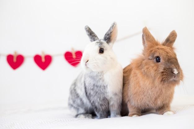 Conejos cerca de corazones de adorno en giro