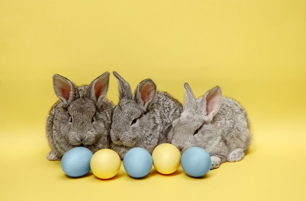 Conejos de pascua con huevos pintados en pared amarilla