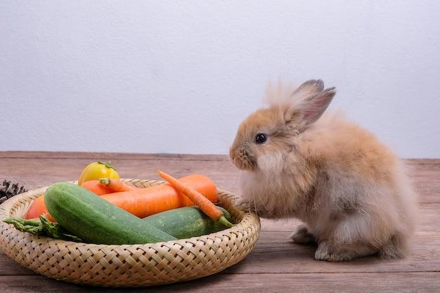 Conejos en pisos de madera, zanahorias, pepinos, tomates y barriles en pisos de madera