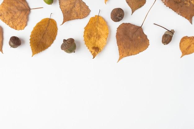 Conjunto de bellotas y hojas marchitas de otoño