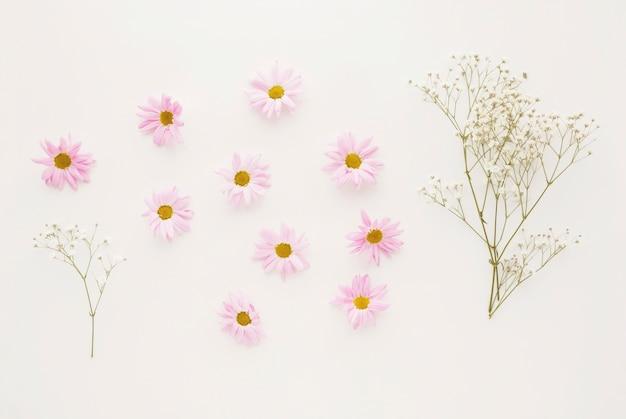 Conjunto de capullos de flor rosa margarita cerca de ramitas de plantas