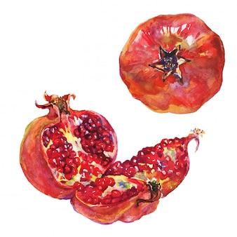 Conjunto dibujado a mano de granada madura y entera. fruta fresca acuarela aislada