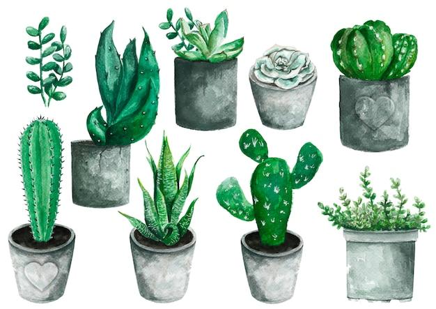 Conjunto de elementos de acuarela pintados a mano de alta calidad para su diseño con plantas suculentas, cactus.