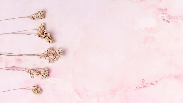 Conjunto de flores secas