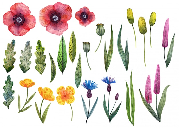 Conjunto de flores silvestres silvestres acuarelas