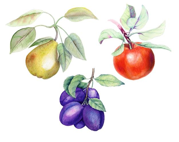 Conjunto de frutas ilustración botánica acuarela vintage