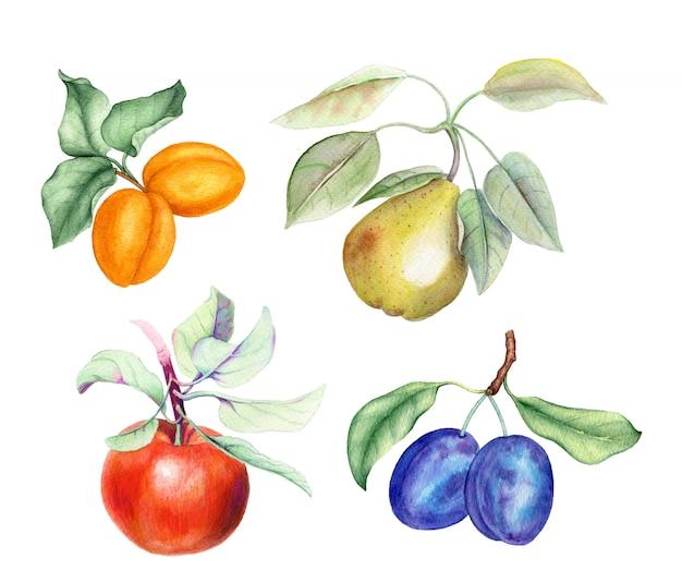 Conjunto de frutas: ramas de albaricoque, pera, manzana y ciruela con hojas verdes