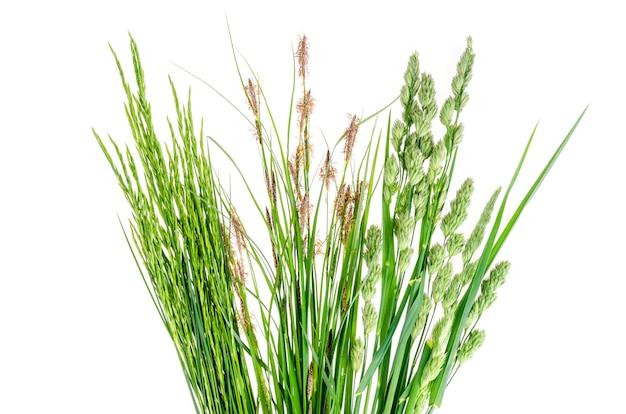 Conjunto de hierba verde salvaje en blanco.