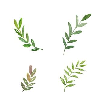 Conjunto de hojas de acuarela