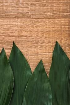 Conjunto de hojas verde oscuro