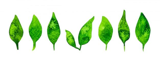 Conjunto de hojas verdes acuarela aislado