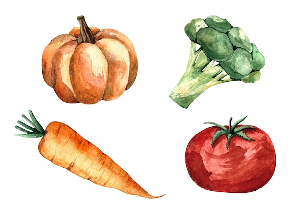 Conjunto de ilustración acuarela con verduras, tomate, calabaza, zanahoria, brócoli, ilustración aislada sobre fondo blanco