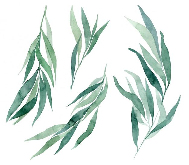 Conjunto de ilustraciones de acuarela rama de eucalipto sobre un fondo blanco. elementos para crear invitaciones de boda y tarjetas en estilo ecológico.