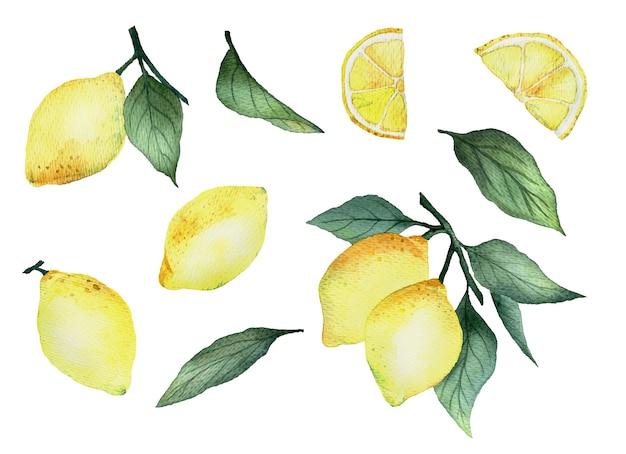 Conjunto de limones acuarelas con hojas