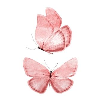 Conjunto de mariposas rojas aisladas sobre fondo blanco. foto de alta calidad