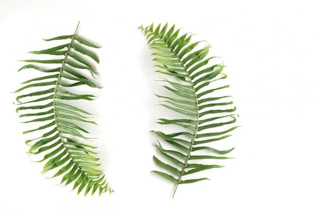 Conjunto natural de hojas de helecho, hojas de helecho ramita sobre fondo blanco, objetos aislados