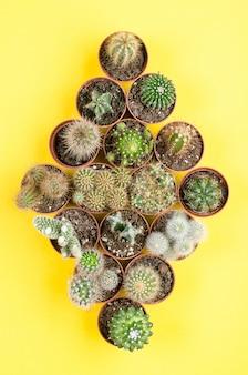 Conjunto de pequeña vista superior de cactus