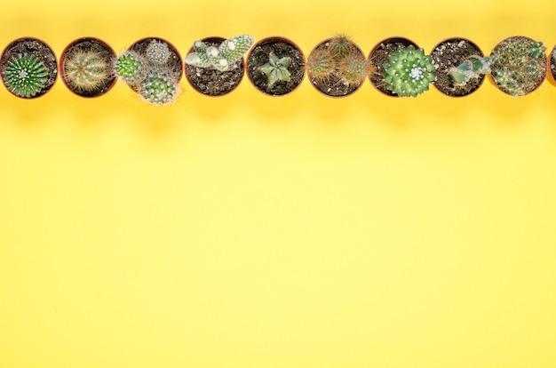Conjunto de pequeños cactus sobre un fondo amarillo. vista superior.
