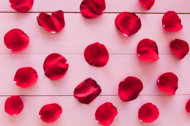Conjunto de pétalos de flores rojas.