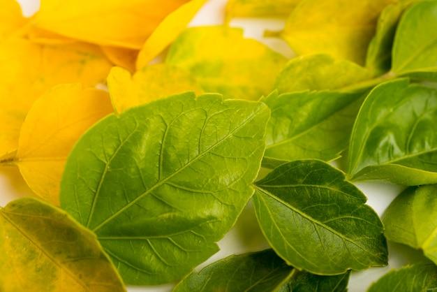 Conjunto de primer plano del concepto de hojas de otoño