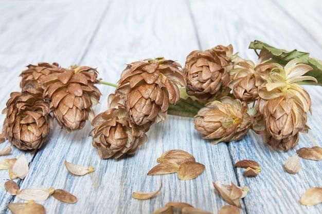 Conos de lúpulo marrón en el fondo de madera clara