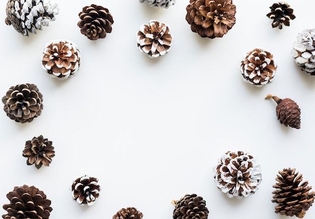 Conos de pino con espacio de diseño sobre fondo blanco