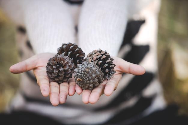 Conos de pino natural en mano