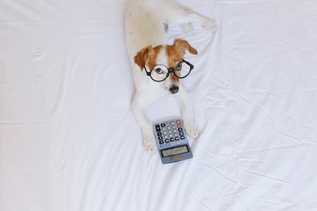 Contador de perro pequeño lindo pensando y calculando con la calculadora en la cama