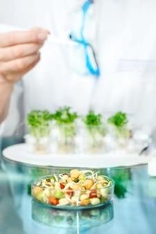 Control de calidad de brotes de soja para consumo general.