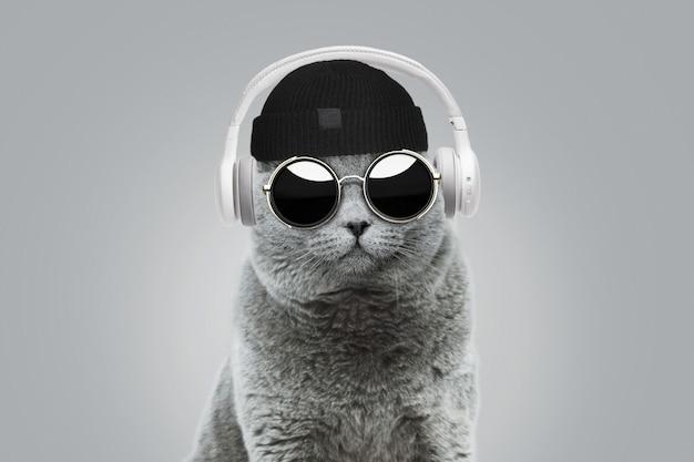 Cool divertido gato hipster con sombrero de moda y gafas de sol redondas vintage escucha música en auriculares inalámbricos blancos sobre fondo gris. concepto de idea creativa. estilo animal