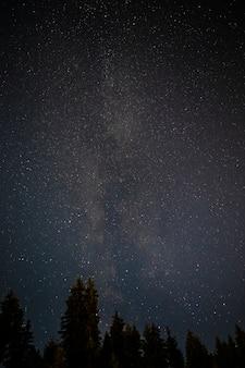 Copas de los árboles de hoja perenne con cielo estrellado